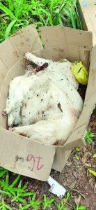 Morador denuncia descarte de animais mortos usados em rituais religiosos
