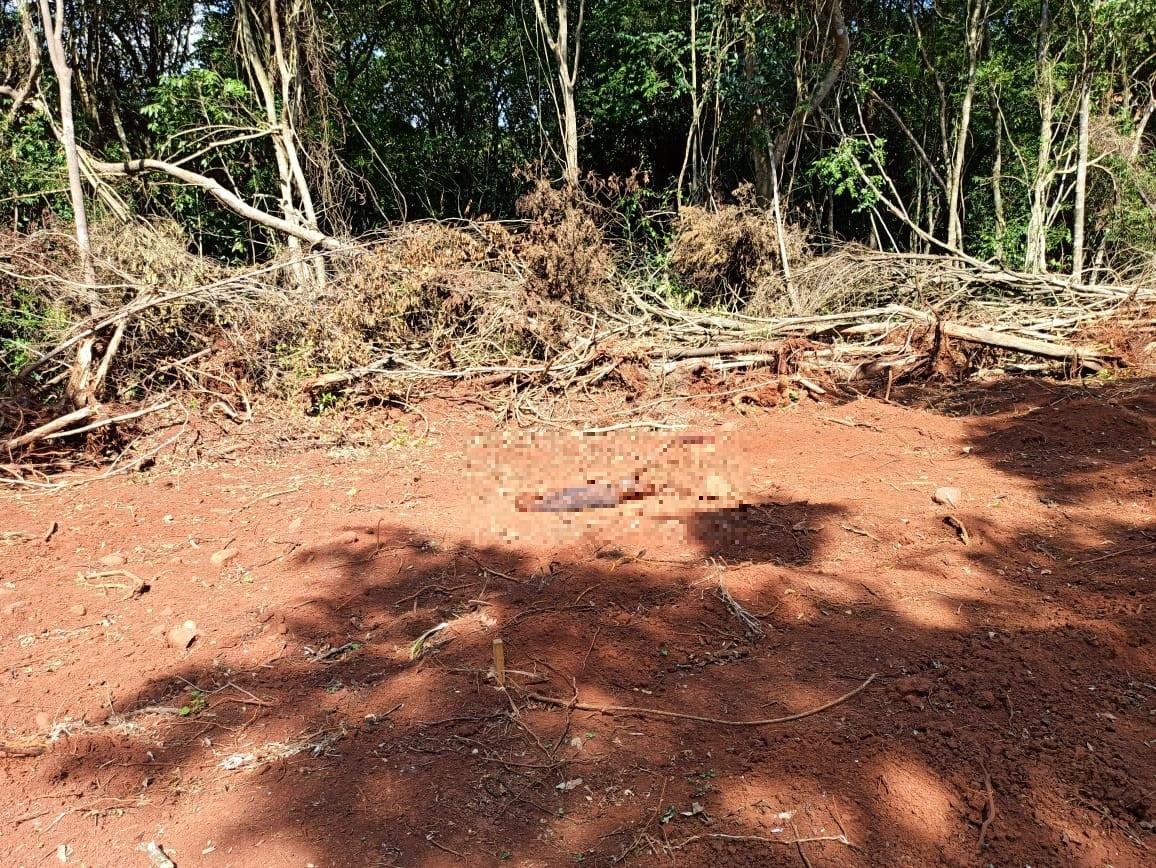 Cadáver é encontrado às margens da BR-386, em Estrela