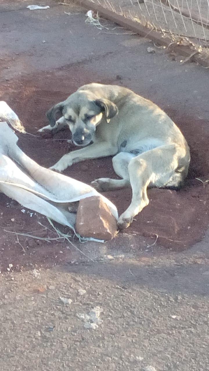 Cachorros abandonados incomodam moradores do Nova Morada