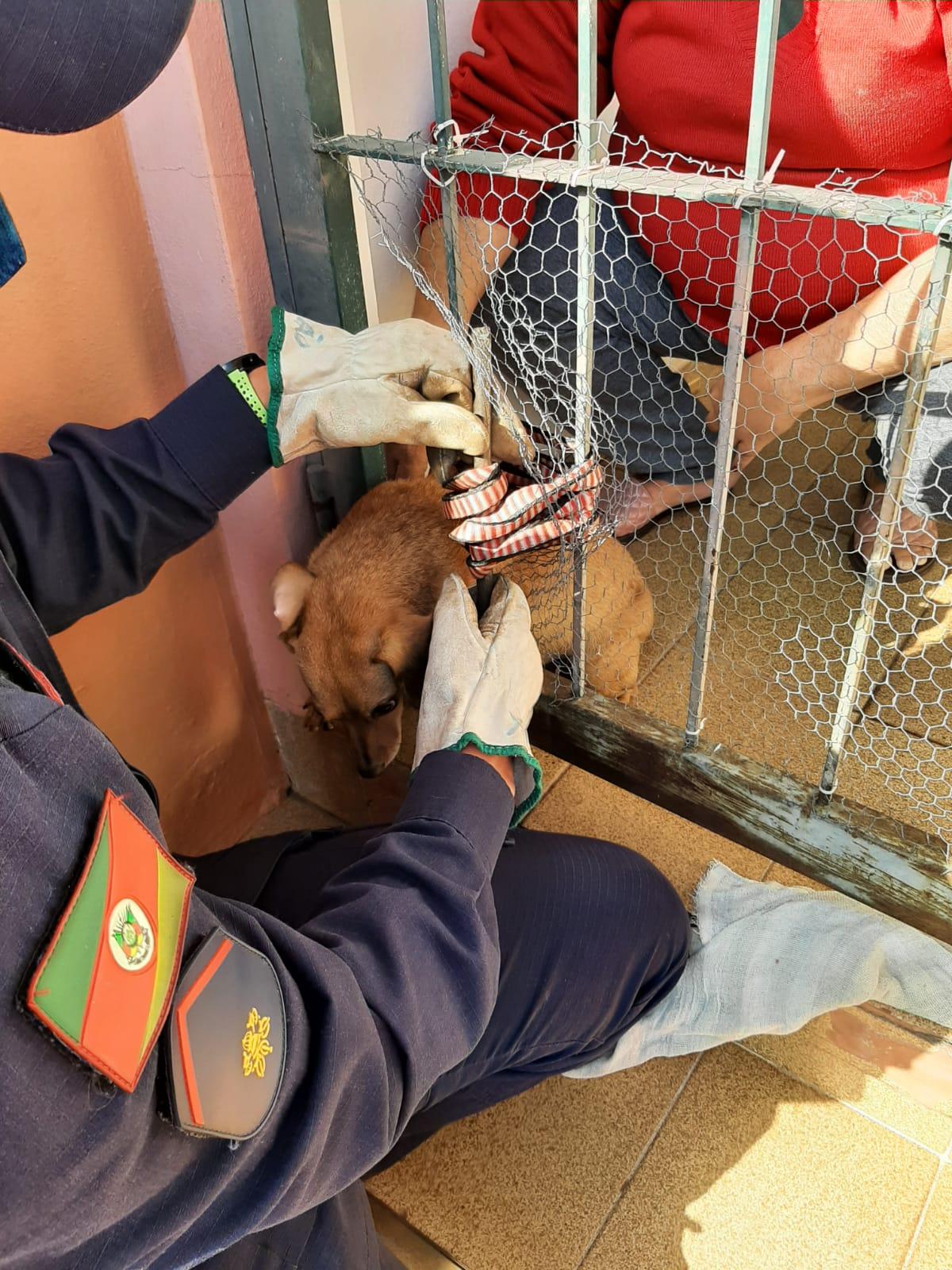 Cãozinho fica trancado em grade e é resgatado com auxílio dos bombeiros